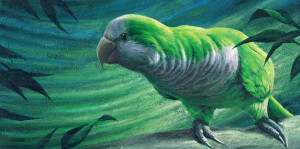 Turbo, Painting by Murray Charteris
